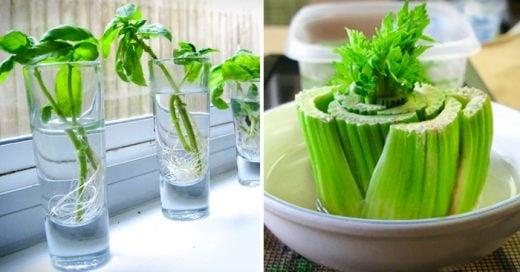 10 Alimentos que puedes comprar una vez y cultivar para siempre
