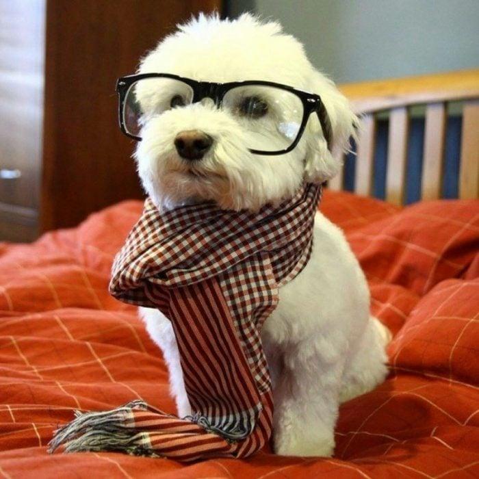 Perro blanco vestido de hipster