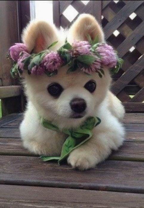Cachorro con flores en la cabeza