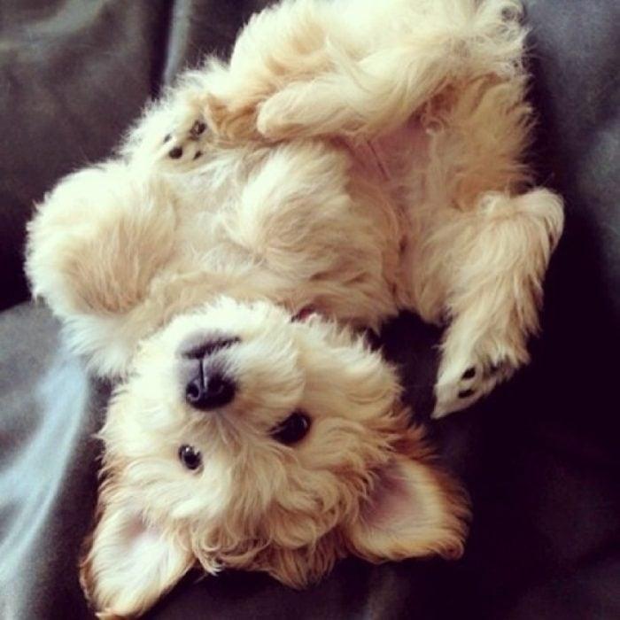 Cachorro acostado en la cama