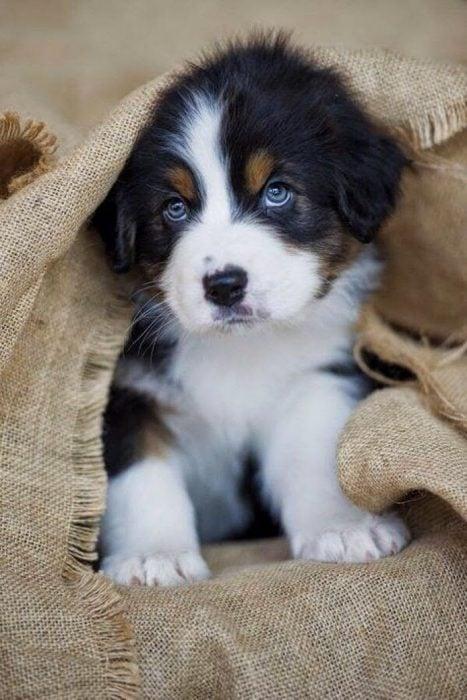 Cachorro con mirada tierna