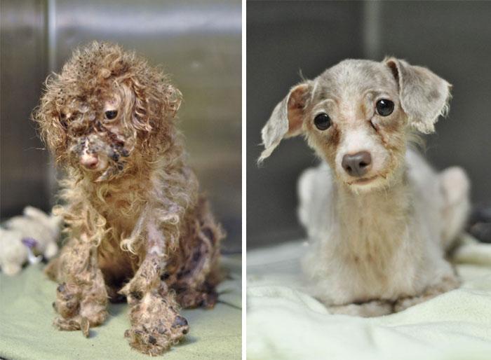 Perrito antes y después de ser rescatado de la calle