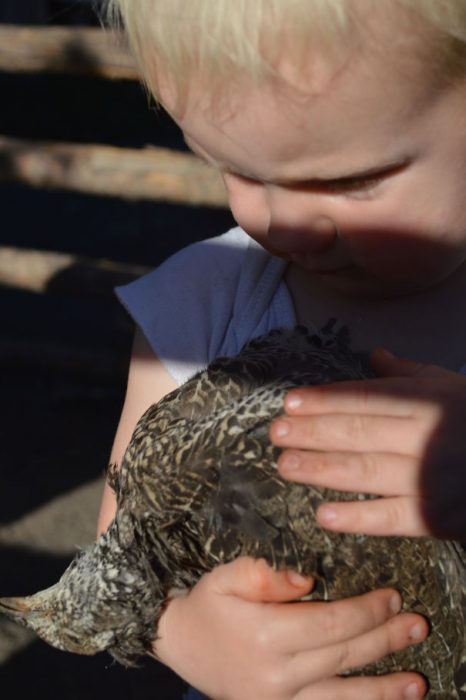 Niño tratando de revivir5 a un pájaro que fue asesinado