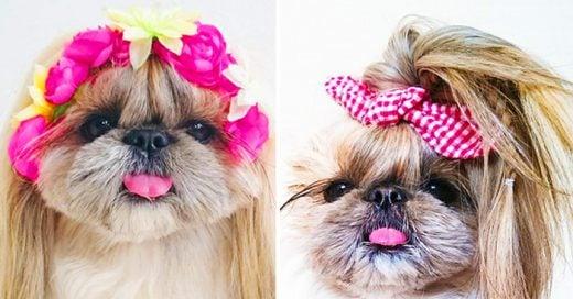 Galería de fotos de Kuma, la perrita más famosa de Instagram