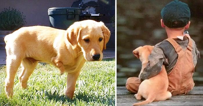 historia sobre un granjero que le dijo a un niño que no comprara a un perrito invalido