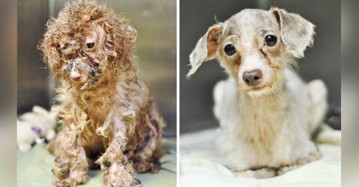 fotos del antes y despues de algunos perros que fueron rescatados en malas condiciones