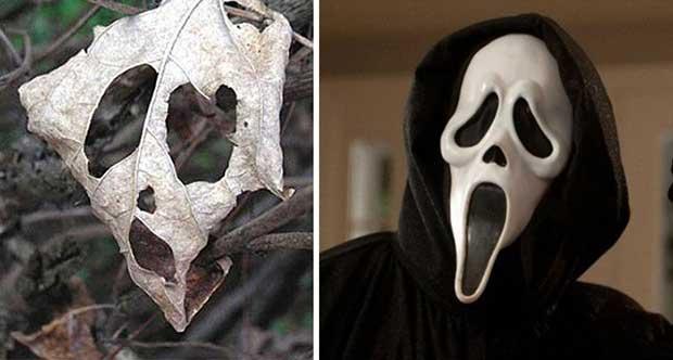cosas que se parecen a otras, mascara de scream igual a una hoja de árbol