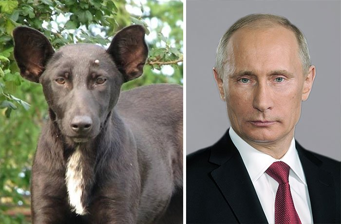 cosas que se parecen a otras, perro que es igual a bladimir puttin