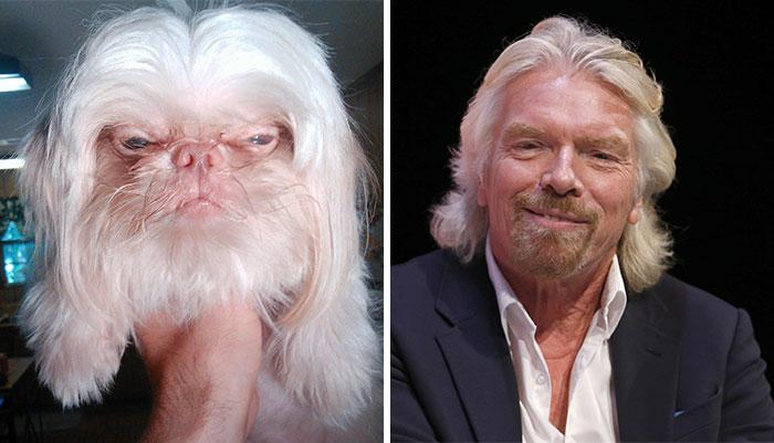 cosas que se parecen a otras, perro que es igual a un actor de cine