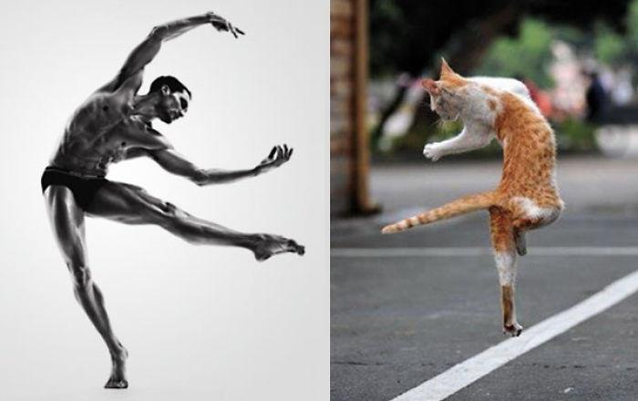 cosas que se parecen a otras, gato que es igual a un bailarín