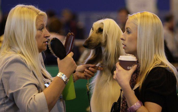 cosas que se parecen a otras, mujeres rubias que son parecidas a un perro