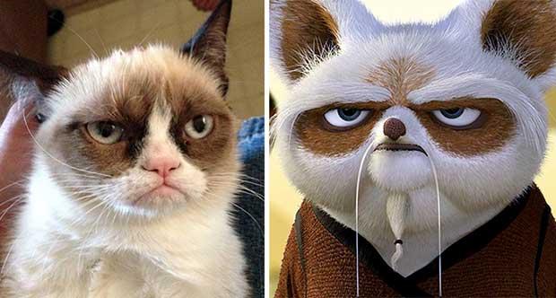 cosas que se parecen a otras, gato que se parece al maestro shifu