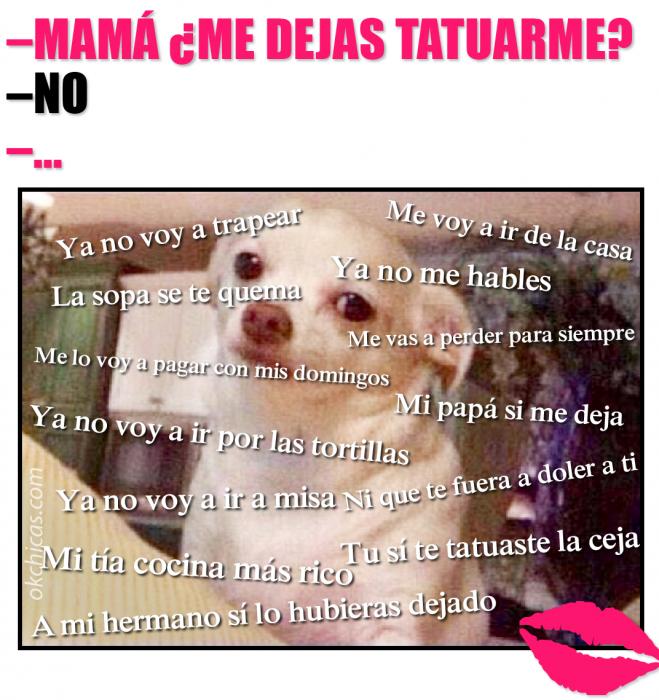 meme perro chihuahua blanco