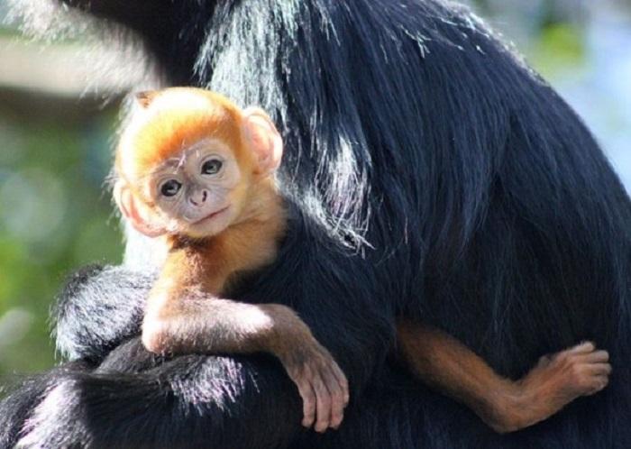 mono bebé cargado por su mamá