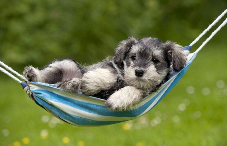 cachorro en hamaca