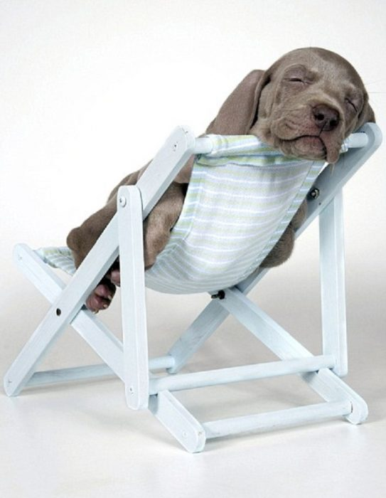 cachorro dormido en silla