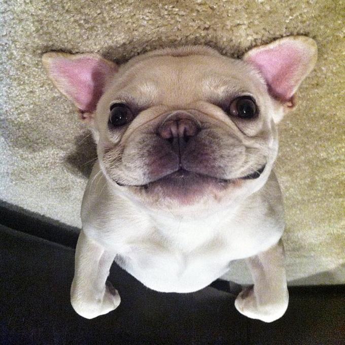 cachorro acostado boca arriba