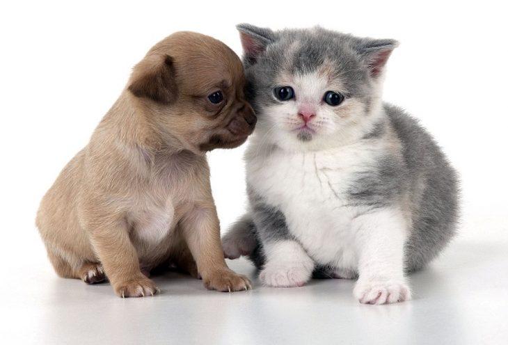 cachorro y gatito
