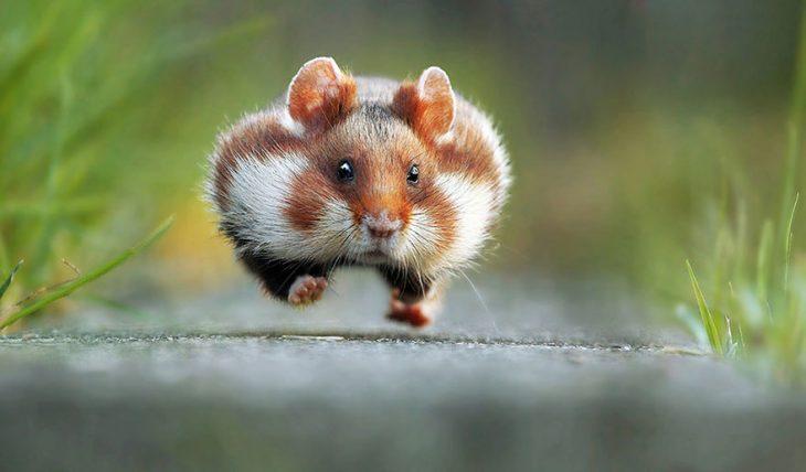 ardilla corriendo
