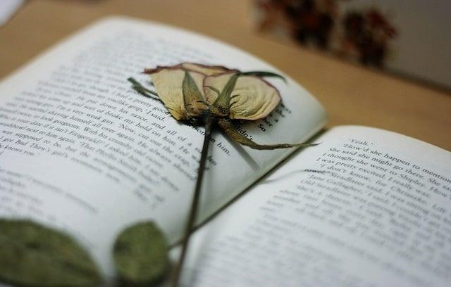 flor seca en medio de libro