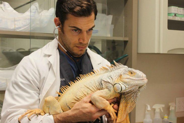 Veterinario Evan Antin con una iguana