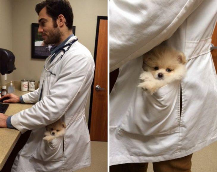 Doctor animales guapo cargando un perrito en la bolsa