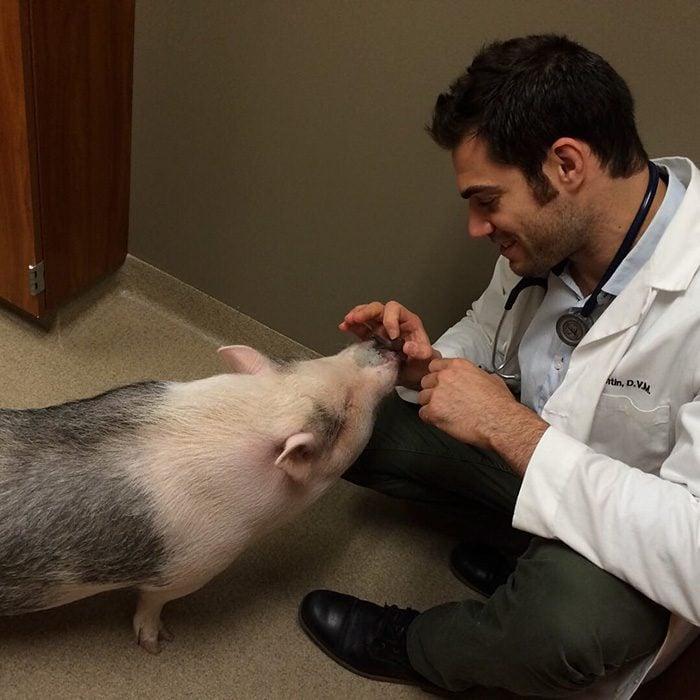 Veterinario Evan Antin con un cerdo