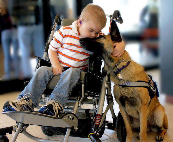 niño en silla de ruedas y pastor alemán
