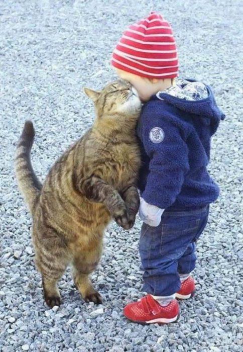 gatito juega con niño pequeño