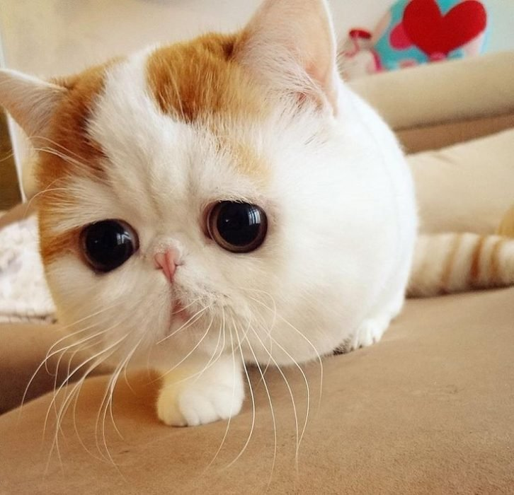 gatito de ojos grandes