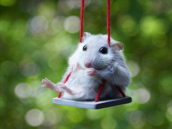 rata en columpio