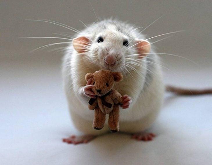 rata con muñeco de peluche miniatura
