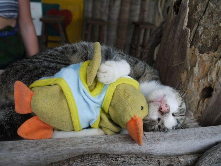 gatito con pato de peluche