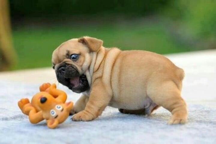 cachorro con peluche