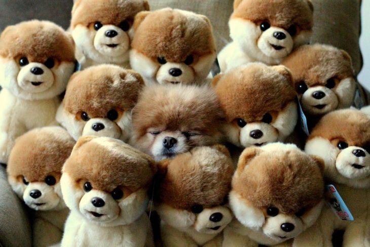 cachorro entre peluches