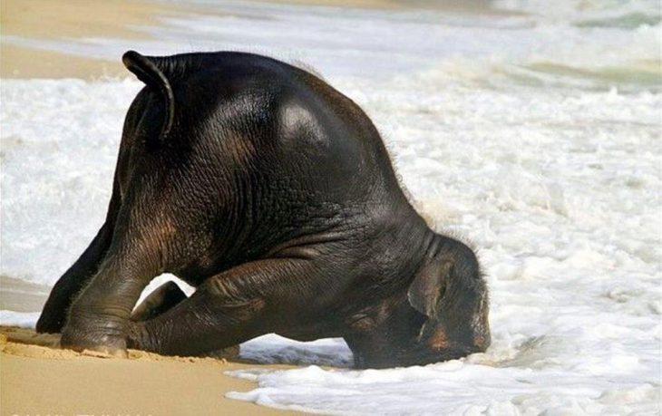 elefante en la orilla del mar