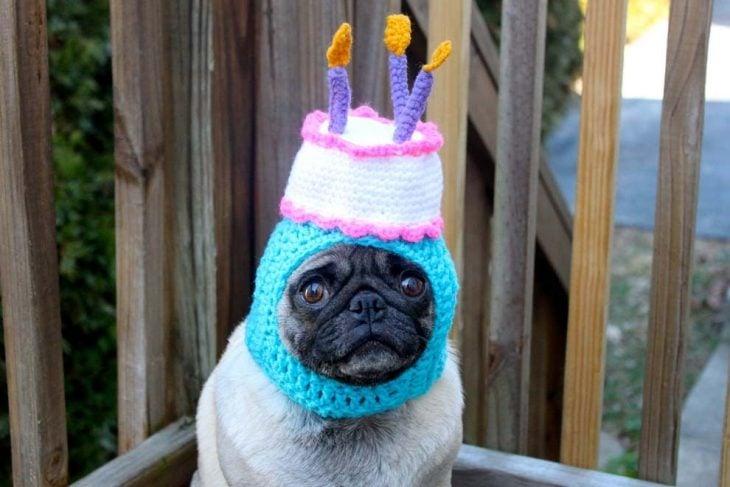 perro pug con gorro de cumpleaños