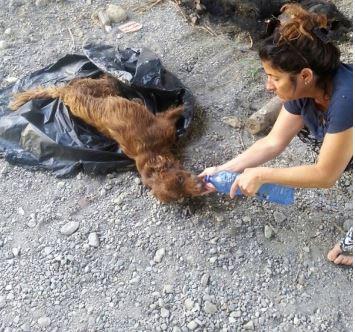 Mujer dandole agua a un perro deshidratado que fue abandonado