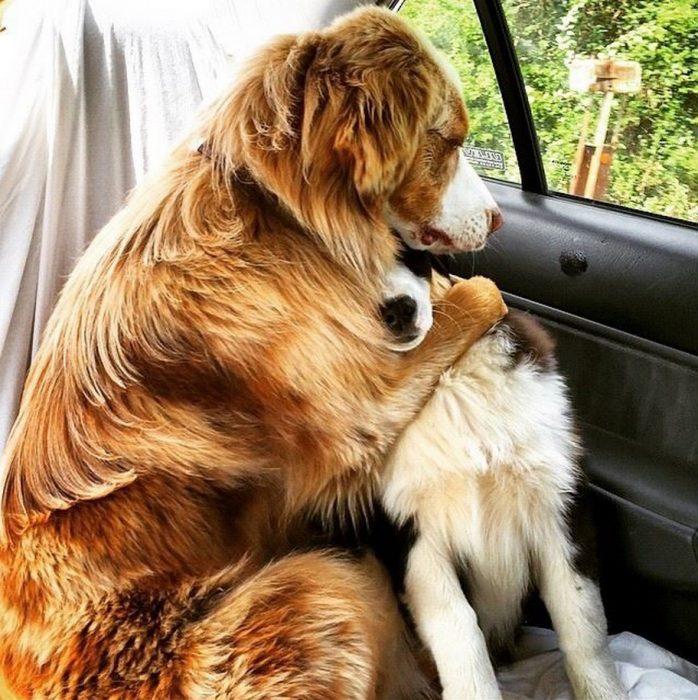 Perros asustados por el veterinario (11)