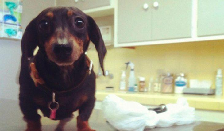 Perros asustados por el veterinario (12)