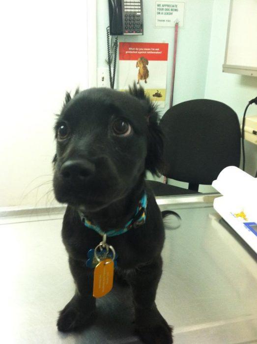 Perros asustados por el veterinario (15)