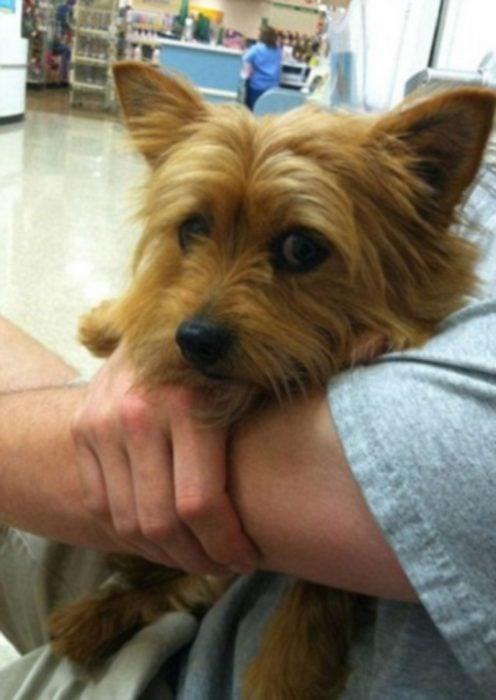 Perros asustados por el veterinario (16)