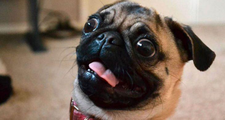 Perros asustados por el veterinario (18)