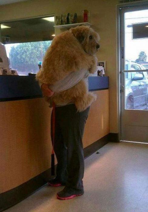 Perros asustados por el veterinario (5)