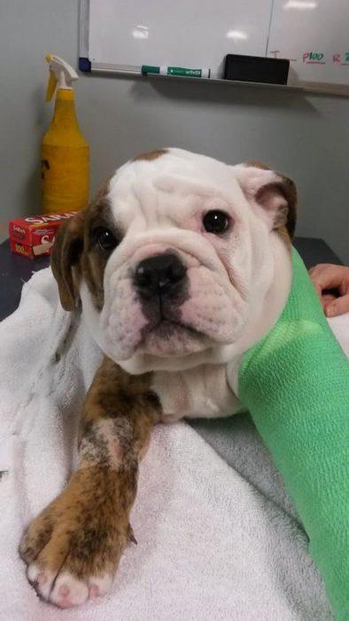 Perros asustados por el veterinario (7)