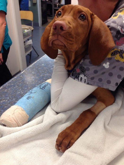 Perros asustados por el veterinario (8)
