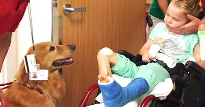"""Unos padres le presentan su hijo casi """"sin vida"""" a un perro. Luego algo milagroso sucede"""