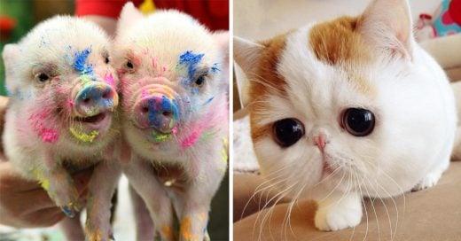 Fotos de animalitos muy tiernos