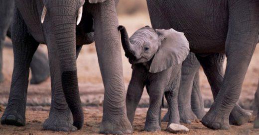 10 embarazos mas extraños y diferentes del reino animal