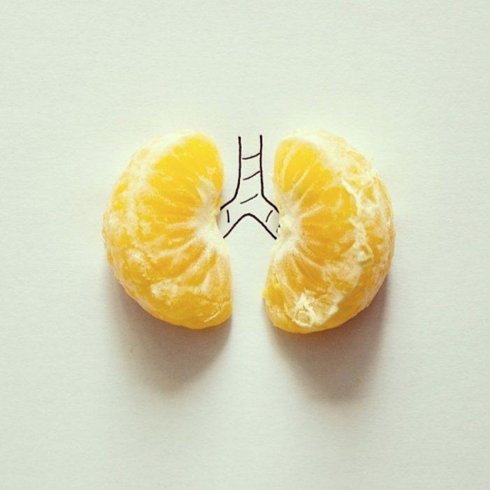 dibujo con pulmones de naranja